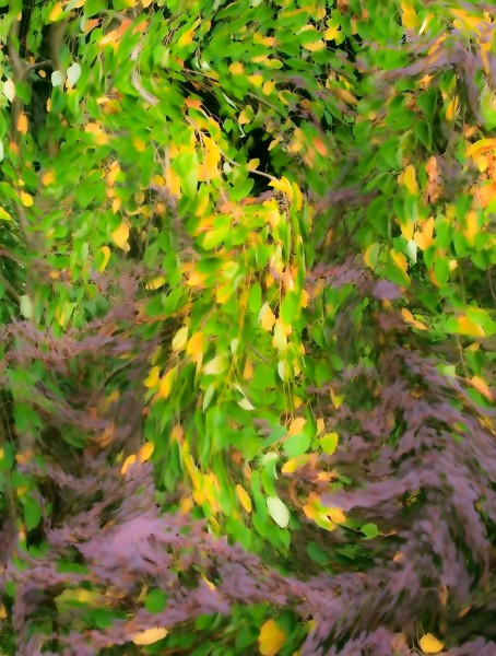 Katsura and Berberis - Foliage Tapestry Swirl Vertical