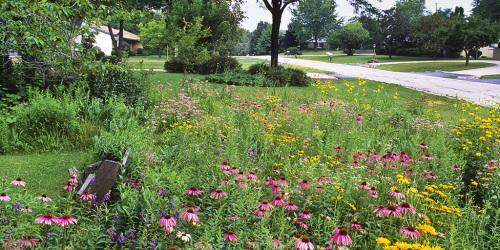 Lawn Reform