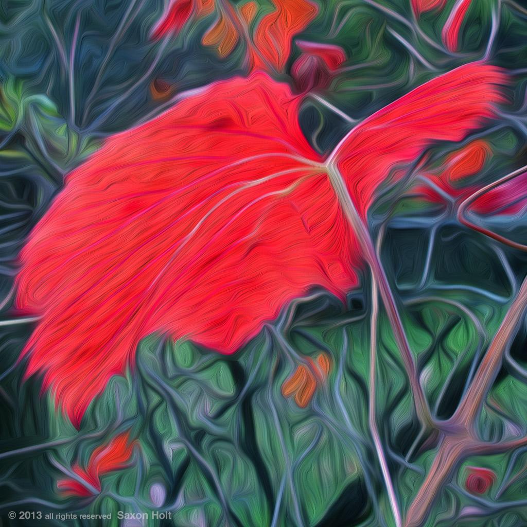 Roger's Red leaf oil Paint filter
