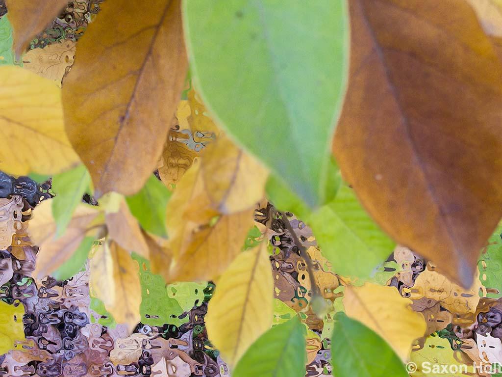 blurry magnolia leaves