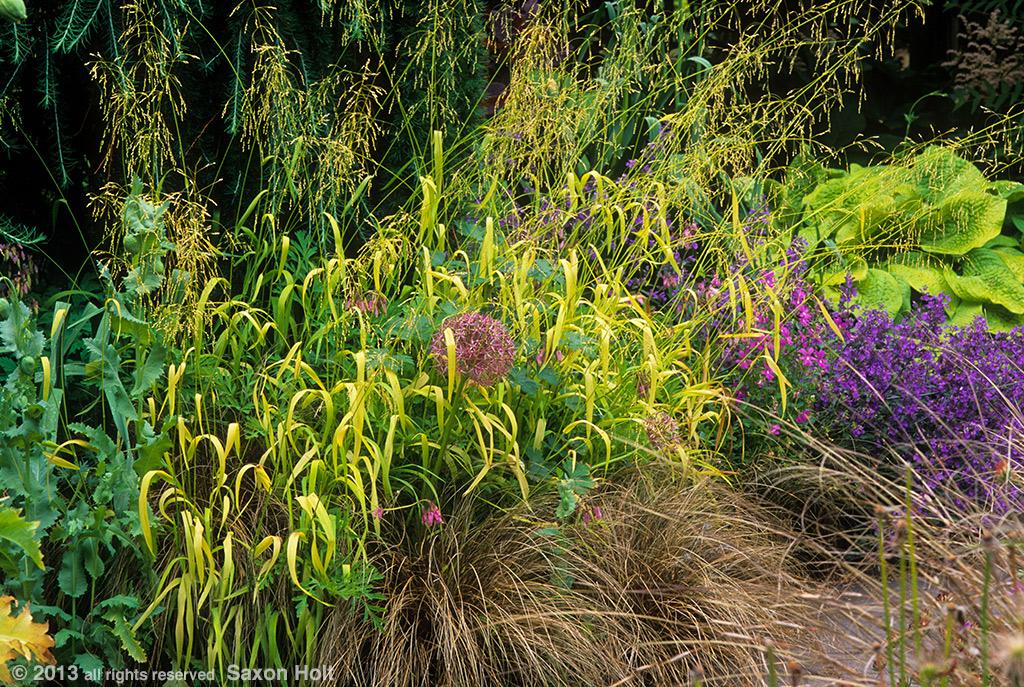 grasses at heronswood nursery