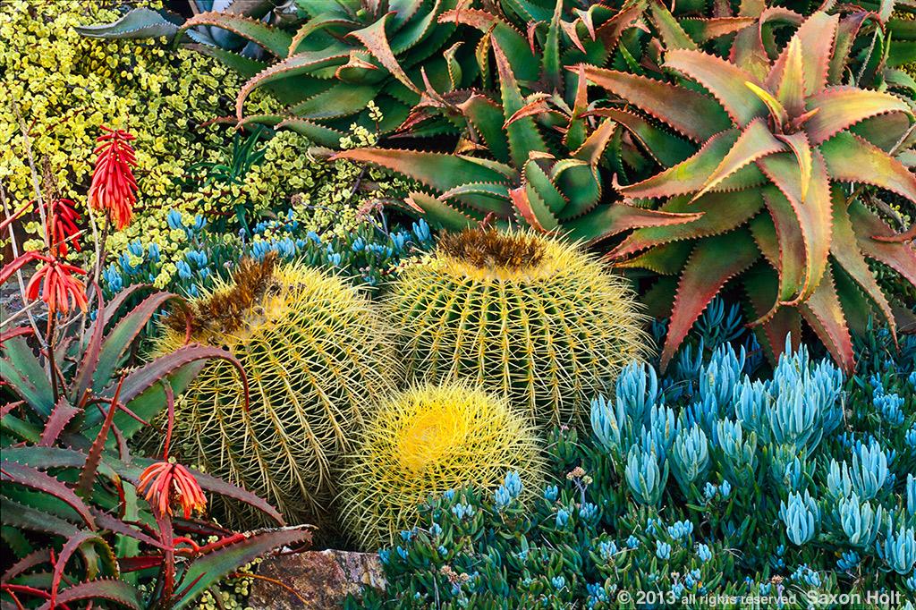 Garden at Solana Succulents
