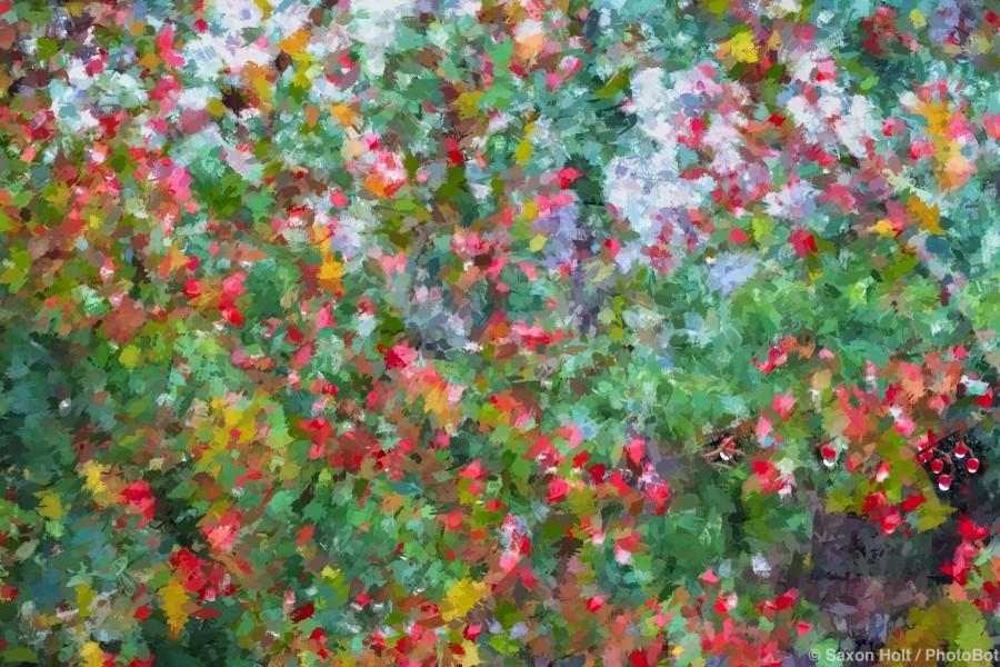 Viburnum Berries in the Rain