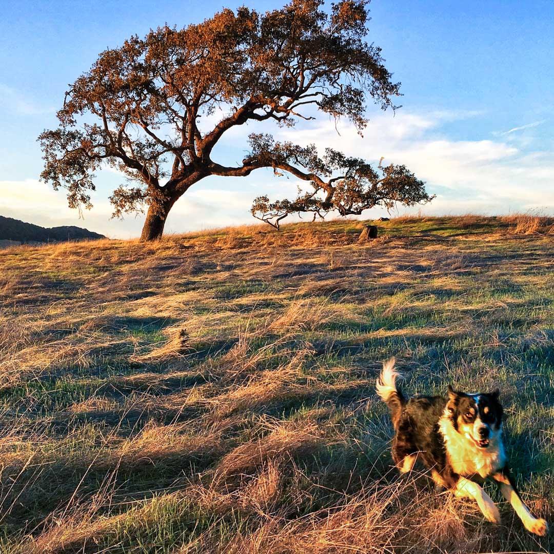 Walks with Kona Dog, Marin County, California